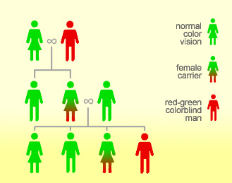 Red-Green Color Blindness Inheritance Pattern