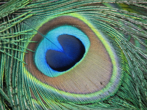 http://www.colblindor.com/wp-content/images/peacock-eye.JPG